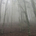 Yes, it was quite foggy!