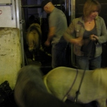 Miniature Horses of Moulin Rouge!!_2