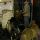 Miniature Horses of Moulin Rouge!!_3
