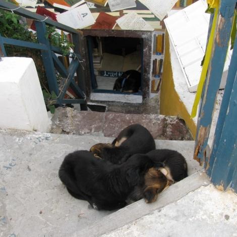 Oia Dogs