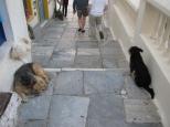 Oia Dogs_2