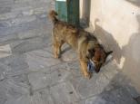 Oia Dogs_3