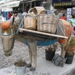 Thera Donkey