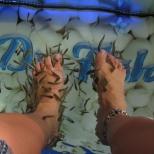 Nibbling Fish