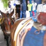 Donkeys!_2