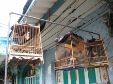 Birds in a Cage