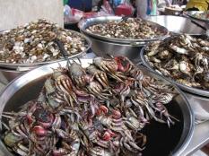 Crabs & Clams