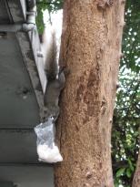 Squirrel Food_2