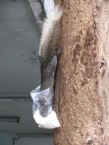 Squirrel Food_3
