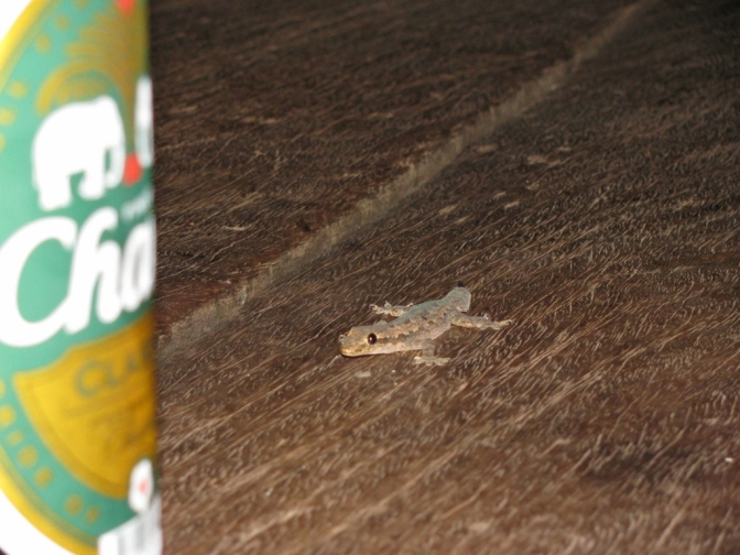 Gecko Hallucinations