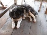 Mama Dog 12 years!