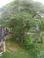 Green Life beside Death Railway