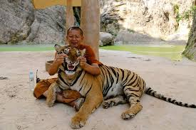 tiger temple_2