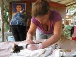 Shaving the Cat