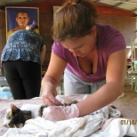 Shaving the Cat