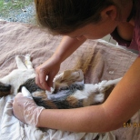 Shaving the Cat_2