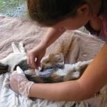 Shaving the Cat_2