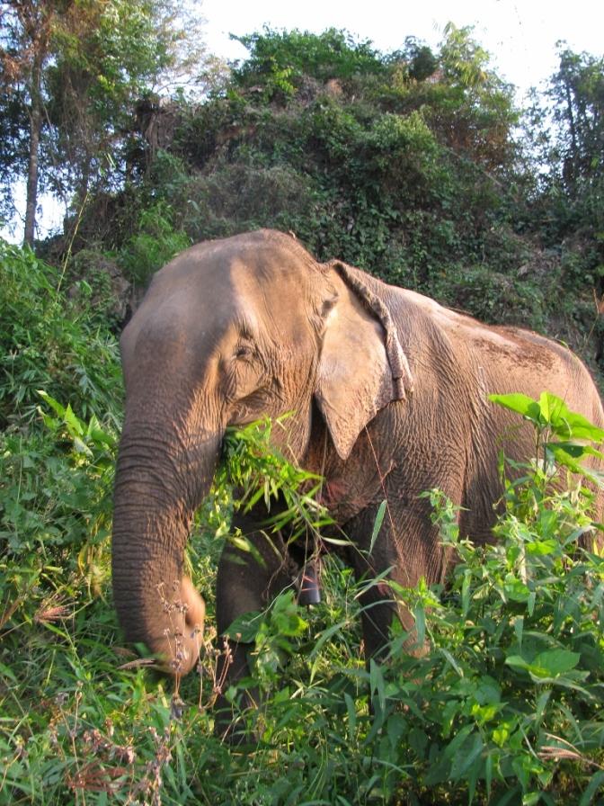 Spay Camp and Elephants