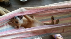 Hanging in the Hammock_2