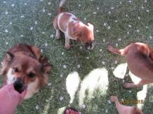 Gizmo, Mabel & Gordon