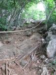Natural Path Start