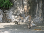 Macaques!_3