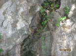 Macaques!_4
