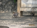Macaques!_6