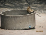 Macaques!_7