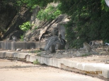 Macaques!_8