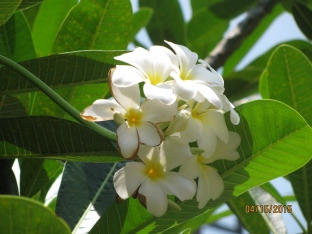 Pretty Foliage_3