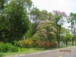 Pretty Foliage_4