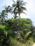 Odd Palm