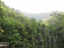 Jungle_2