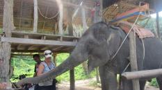 Me with Elephant_2