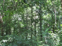 Jungle_3