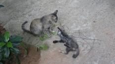 Local Cat_2