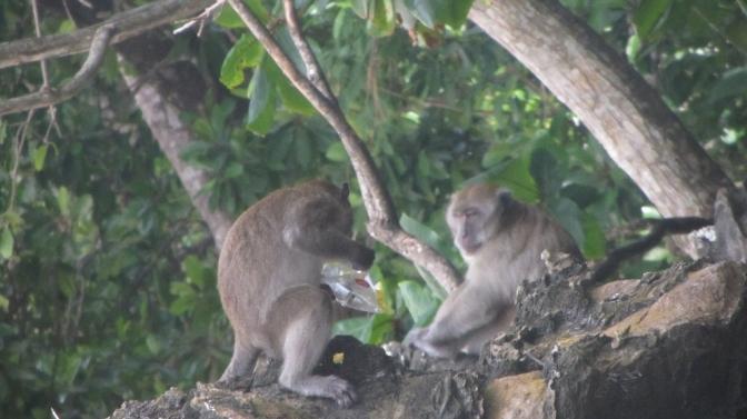 Monkey Beach Adventure