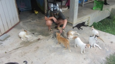 Anna with Shelter Cats_2