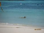 Dog Daily Swim