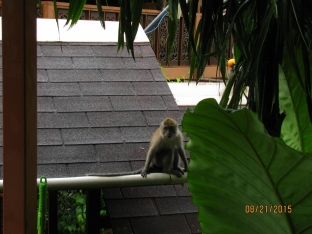 Naughty Monkeys_3