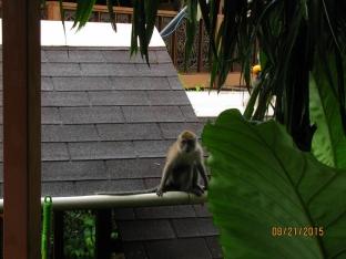 Naughty Monkeys_3