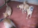Henry, Kechik, Ayumi, Murphy
