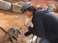 Feeding a Wallaby