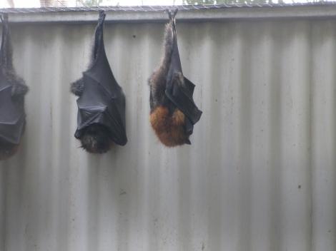 Monster Bats!