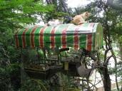 Cats Cart